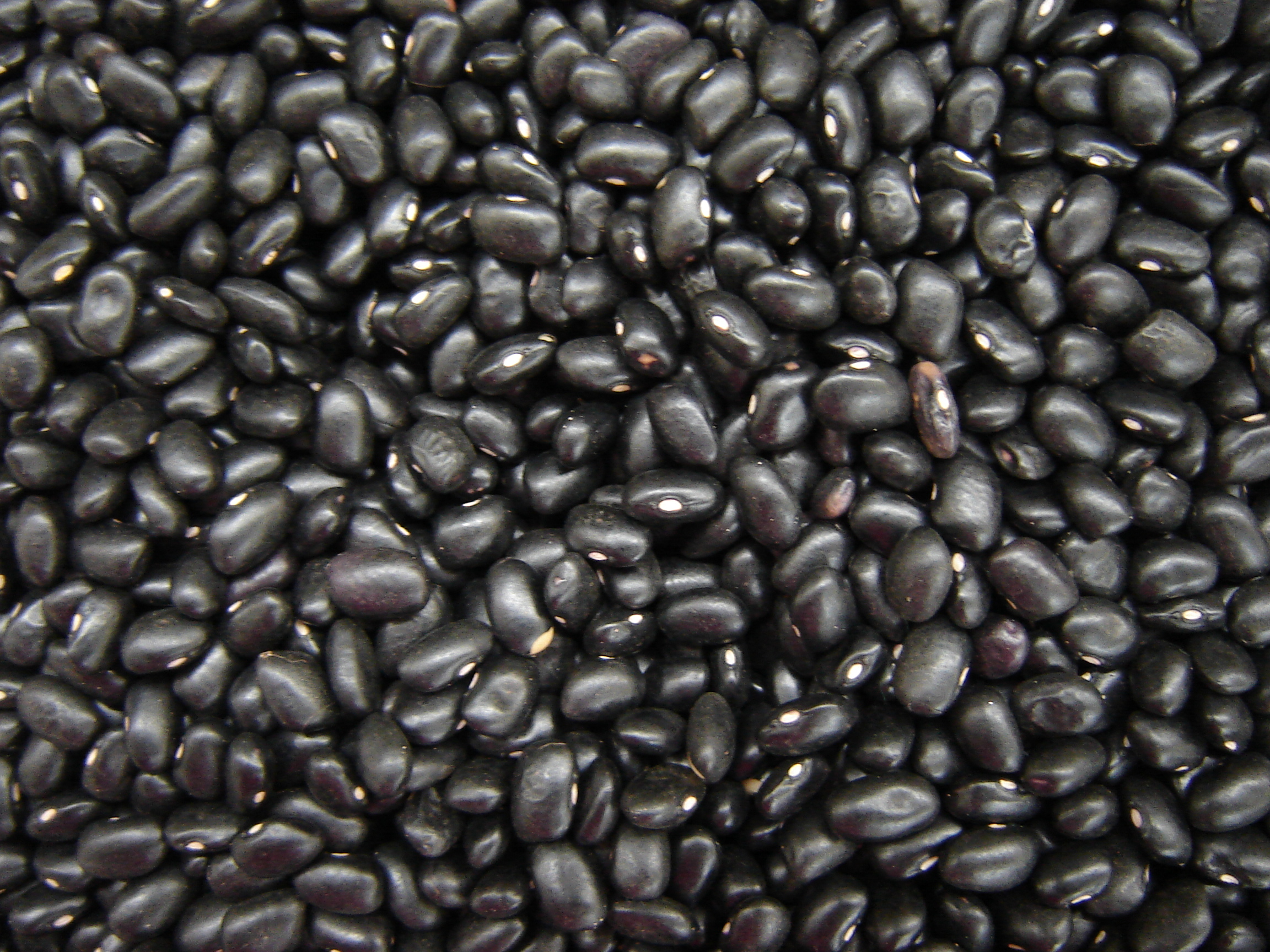 how to buy black beans